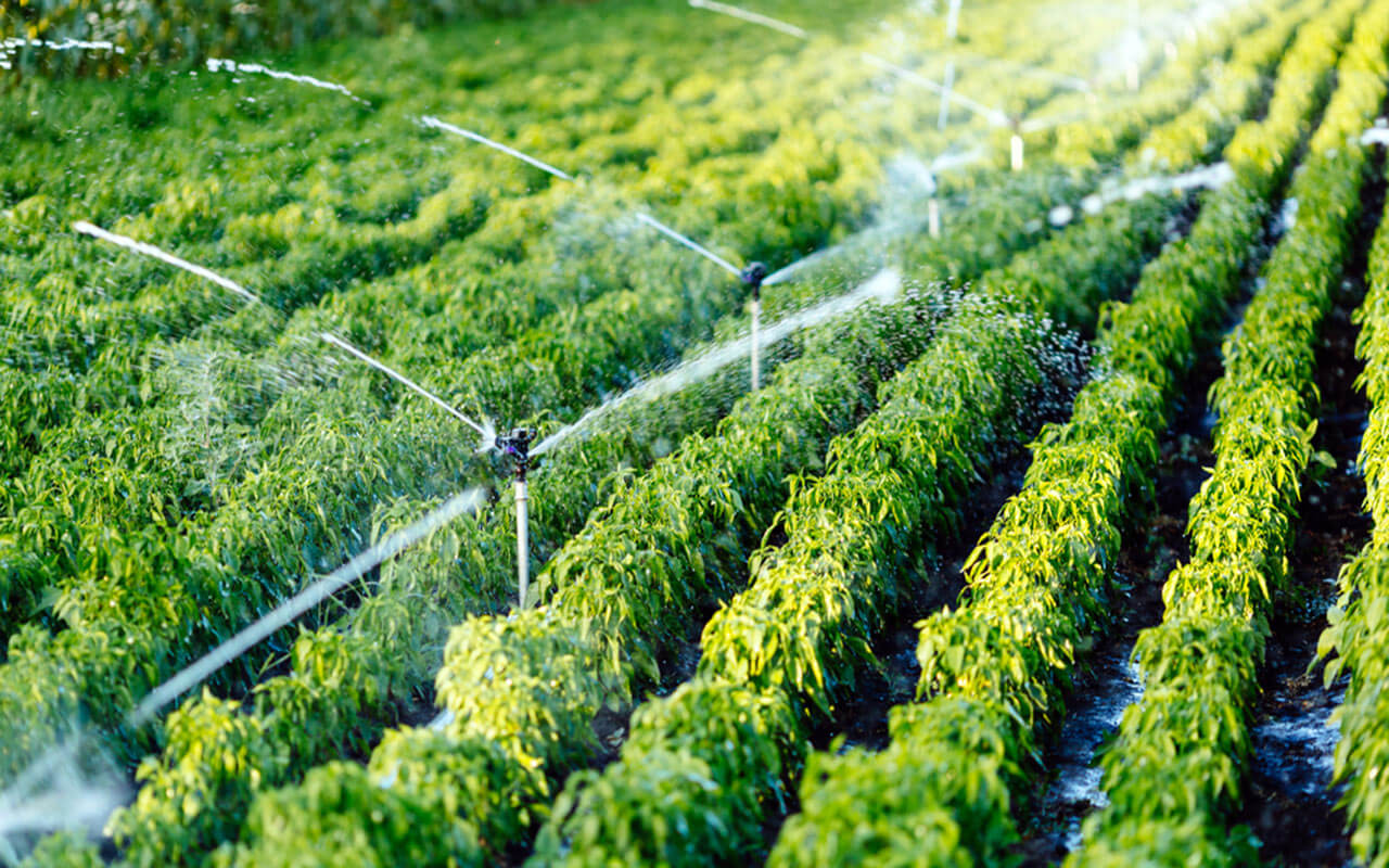 How is an Irrigation Control System Beneficial to You?