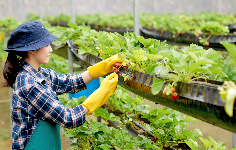 How is Vertical Farming Beneficial for You?